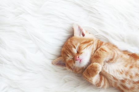 bitcoin kitten